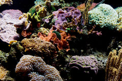 Coral reef. A healthy and vibrant coral reef Royalty Free Stock Photo