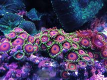 Coral. Reef in home Royalty Free Stock Photography