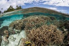 Coral Reef i Melanesia arkivbilder