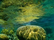 Coral reef illuminated by the sun Stock Photography