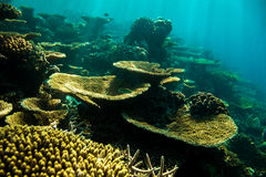 Coral reef in the Indian ocean Stock Photography