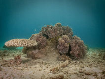 Coral Reef 1, Indonesia Stock Photos