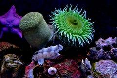 Coral reef. Inhabitants - sea anemone, starfish, fish royalty free stock photos
