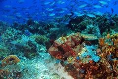 Coral Reef Komodo Royalty-vrije Stock Foto's