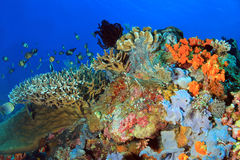 Coral Reef Komodo Royalty-vrije Stock Afbeeldingen