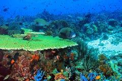 Coral Reef Komodo Stock Photo