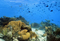 Coral reef Landscape Royalty Free Stock Photography