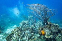Underwater coral reef landscape full of fish Stock Images