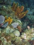 Coral Reef Landscape i det karibiska havet Royaltyfri Bild