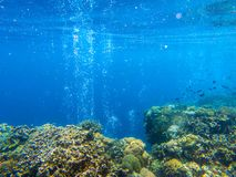 Coral reef landscape with tropical fish and air bubbles. Oxygen bubbles in blue seawater. Marine animals in wild nature. Coral reef view. Tropical seashore royalty free stock image