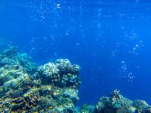 Coral reef landscape with tropical fish underwater photo. Oxygen bubbles in blue seawater. Marine animals in wild nature. Coral reef landscape with tropical fish royalty free stock photos