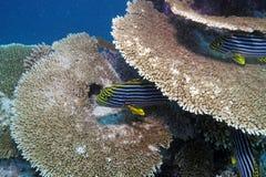 Coral Reef Landscape tropicale colorée Photos stock