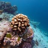 Coral Reef Landscape tropicale colorée Image libre de droits