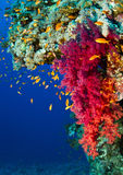 Coral reef life Stock Photography