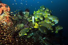 Coral Reef Life Stock Images