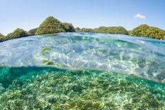 Coral Reef and Limestone Islands in Palau royalty free stock images
