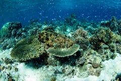 Coral Reef lindo Foto de Stock