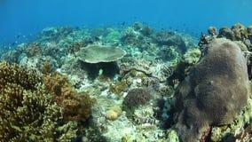 Coral Reef lindo em Alor, Indonésia vídeos de arquivo