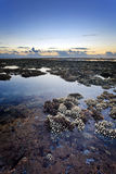 Coral reef at low tide Royalty Free Stock Photography
