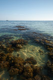 Coral Reef Low Tide Horizon Crystal Clear Water Stock Image