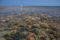 Coral Reef During Low Tide. A shallow reef is exposed during a severe low tide in Indonesia. This diverse region is within the Coral Triangle and has high marine royalty free stock photography