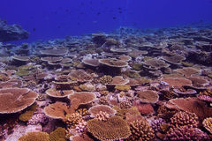 Coral reef. In the Maldives Stock Photos