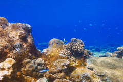 Coral reef at Maldives Stock Photos