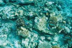 Coral reef at Maldives Royalty Free Stock Images