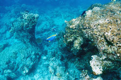Coral reef at Maldives Stock Photography