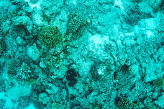 Coral reef at Maldives Stock Images
