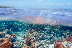 Coral reef at Maldives Royalty Free Stock Images