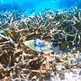 Coral reef at Maldives Royalty Free Stock Photography