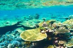 Coral reef at Maldives Royalty Free Stock Photos