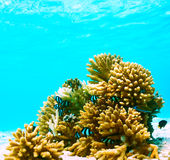 Coral reef at Maldives Stock Photo