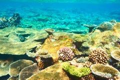Coral reef at Maldives Stock Image