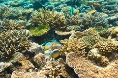 Coral reef at Maldives Stock Images