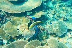 Coral reef at Maldives Royalty Free Stock Image