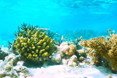 Coral reef at Maldives Royalty Free Stock Photography