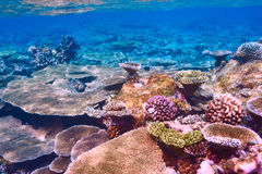 Coral reef at Maldives Royalty Free Stock Image