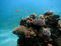 Reef with colorful fish royalty free stock images