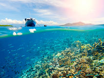 Coral reef with many fish near Bunaken Island, Indonesia Royalty Free Stock Image