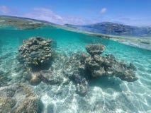 Coral reef sea life in Rarotonga Cook Islands. Coral reef and marine under water sea life in Rarotonga, Cook Islands Royalty Free Stock Photo