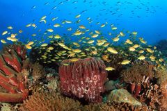 Coral Reef Moalboal immagine stock
