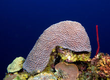Coral reef near Cayo Largo, Cuba Royalty Free Stock Photos