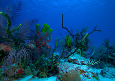 Coral reef near Cayo Largo, Cuba Royalty Free Stock Photography