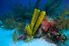 Coral reef near Cayo Largo, Cuba Royalty Free Stock Images