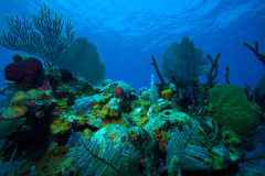 Coral reef near Cayo Largo, Cuba Stock Photo