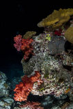 Coral reef by night in maldives Stock Photography