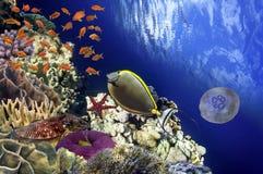 Coral Reef och tropisk fisk i solljus Royaltyfri Bild
