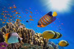 Coral Reef och tropisk fisk i solljus Royaltyfri Foto